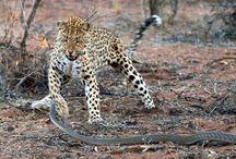 Wildlife interacting at AfriCat