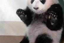 panda;)