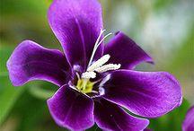 Plants: Purple