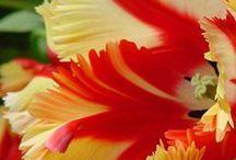 Flowers & Garden / by Rachel Newberry Smith