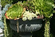 Succulents and Bromeliads / by Kathy Peters