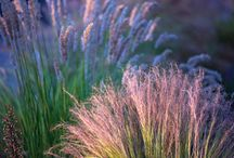 Summer in Arboretum Trojanów / Ornamental grasses