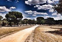 Mi Madrid / Los paisajes que tengo cerca