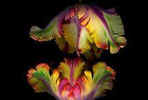 blommmor
