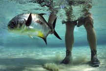 Fly Fishing in the Caribbean / Access to the best locations and best fly fishing guides in the Caribbean