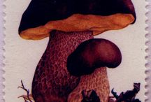 funghi e francobolli / filatelia e micologia