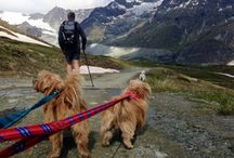 Dog-friendly holidays abroad / Travel abroad with your dog to these dog-friendly hotels, cottages and chalets
