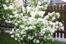 Blomster til hagen