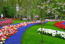 Ruigrok Flowerbulbs / Fall & spring bulb planting inspiration