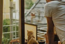 Cats and people / Cats and human characters