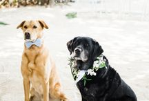 Mans Best Friend at Your Wedding / Don't forget to include your furry friends in your wedding day!