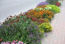 Hellstrip Gardens