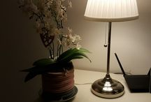 """Koti ❤ My home / """"Linnunpönttö elämää"""" pienessä kodissa jossa tehoneliöt"""