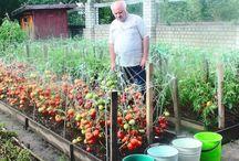 сад- огород