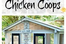 Chicken Coop / by Haelee Fancher Stockton
