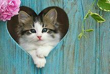 Valentines Cats / All things to inspire Love and Cats or Love for Cats!