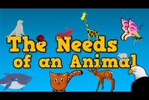 Animal assembly