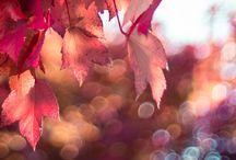 ~ Autumn Splendor ~