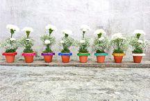 Shaunelle. Fiore   Flowers / I love flowers