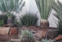 Cycad garden