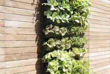 Giardinaggio / Sul terrazzo
