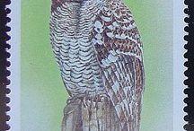 0 owls