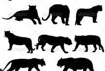 Tigres - Tigers