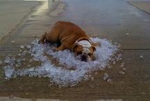 Just chillin dawg!