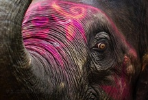 Animals / by Madelaine Love-Life