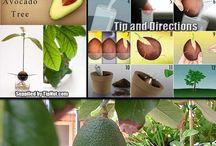 how to .....avocado, roses etc / HOW TO