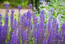 Garden - Sheetal