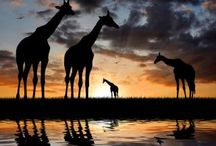 I Love África