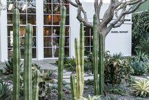 gardens + plants