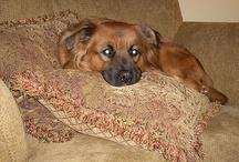 My dog asia