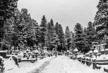 Mount Koya / Buddhist Temple Stay, Okunoin Cemetery, etc.