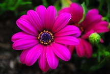 Flora (Flowers, Trees...)