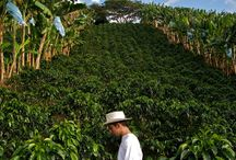 Coffee Farms / Learn more about where coffee comes from