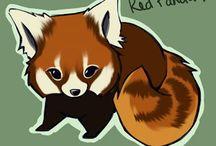 lesser panda illustration