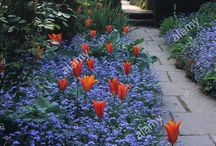 eye catching tulips / Tulips that shout