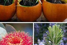 Plante si gradinarit