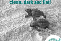 Friends of South Walton Sea Turtles Instagram images / Friends of South Walton Sea Turtles educates and raises awareness about way people can protect the sea turtles and sea life in the Florida panhandle. #30A #SoWal #seaturtles #Seaside