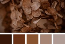 •Colors•