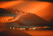 Travel around the world.... / by Gwen xoxo