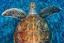 I Like Turtles..... / by Stephanie Pfeffer