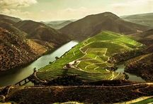 Douro Valley / DOuro Valley / Armamar