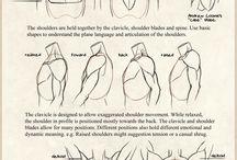 anatomia hombros