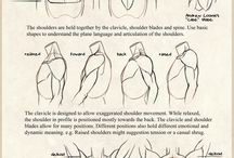 Study_body