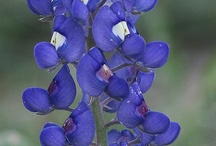 Wildflower Wonders! / The beauty of the Texas Hill Country, right here on Pinterest! / by Informal Classes