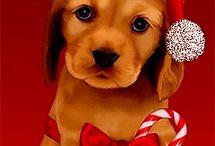 cagnolino con berrettino rosso di natale