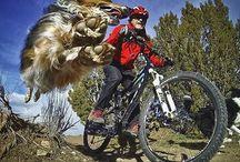 Bicis / Cosas para la bici